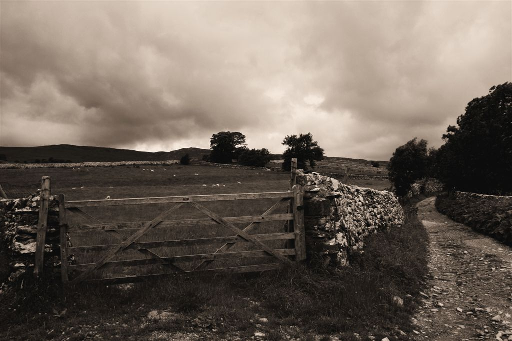 Back Lane, Malham, Yorkshire Dales, sepai, Gate, Sheep and lane by Matt Jackson Life's Images
