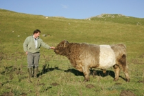 Limestone Country Beef, Belted galloway, Neil Heseltine, Malham, Yorkshire Dales