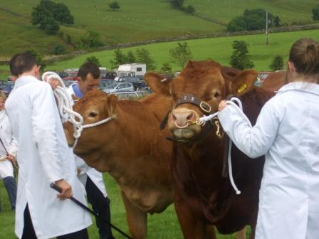 Malham Show, Prize Bull, photo Chris Wildman